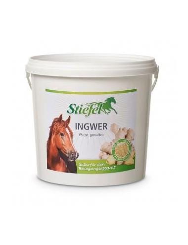 Stiefel Ingwer- Nährstoffe für den Bewegungsapparat von Pferden