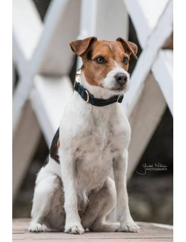 Kentucky Hundehalsband Corduroy