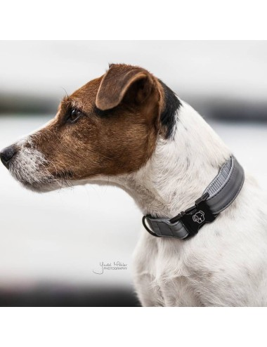 Kentucky reflektierendes Hundehalsband