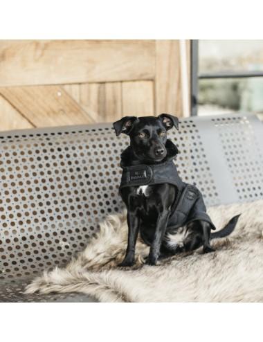 Kentucky Hundemantel schwarz
